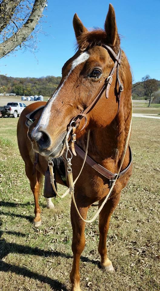 Alumni Herd Truman State University Equestrian Team